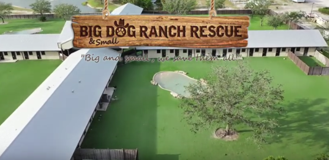 Business Partner Highlight: Big Dog Ranch Rescue