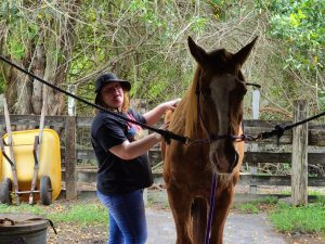 Caitlin caring for a horse